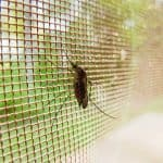 Can mosquitos come through window screens
